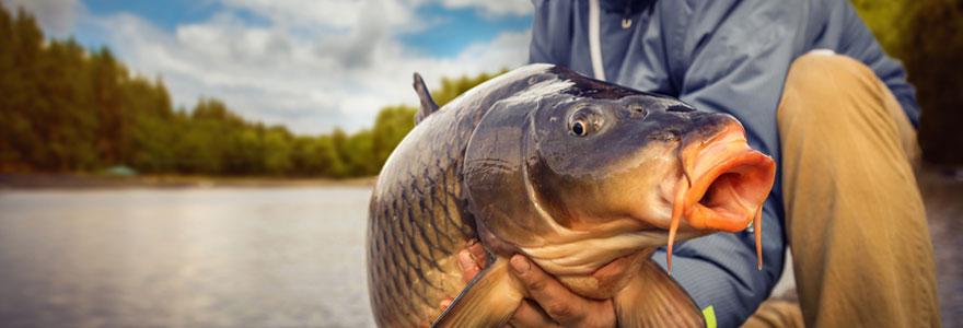 Equipement adapté pour pêcher la carpe